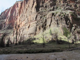 Zion shows a bit of spring